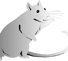 Drawing of friendly looking rat